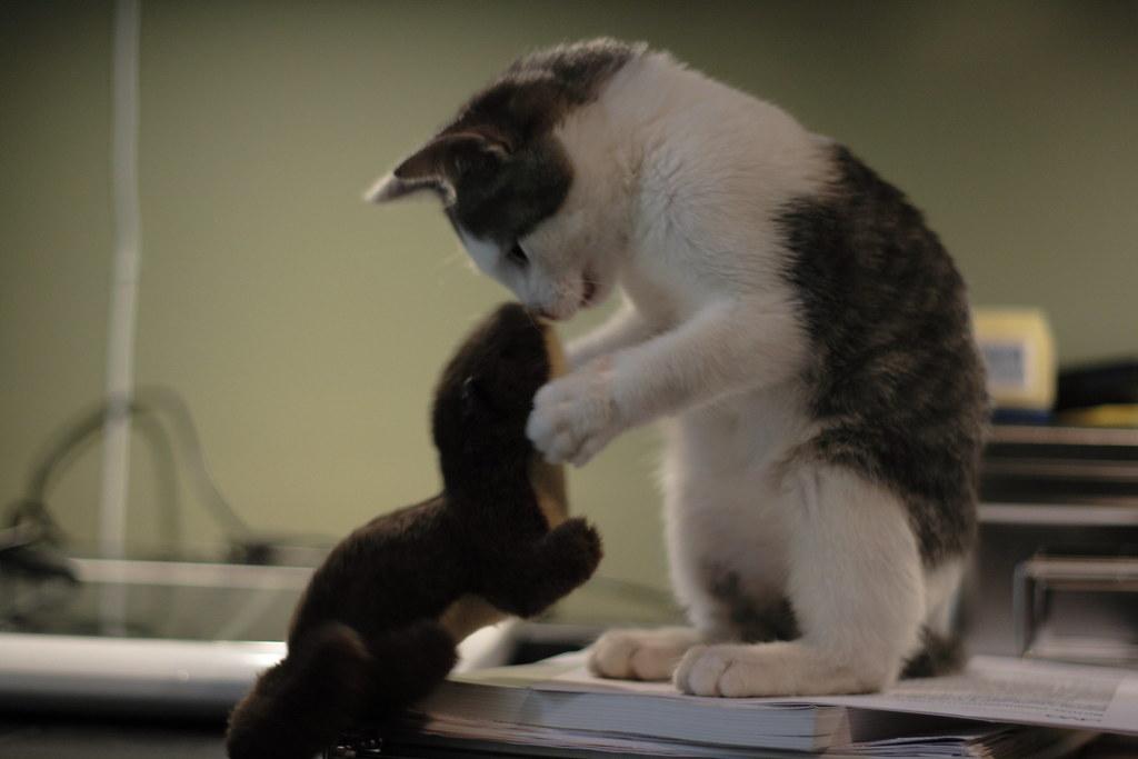 Stuffed Animal Cat Gray
