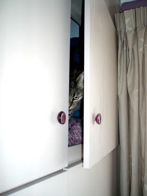 Cat In Cupboard Gif