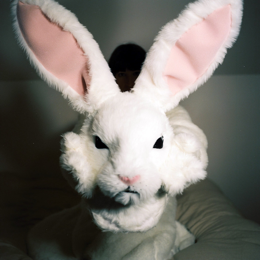 A Giant Rabbit Head As An Offering Of Truce | Lee Summers