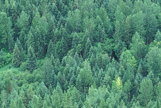 Aerial view of forest | by World Bank Photo Collection