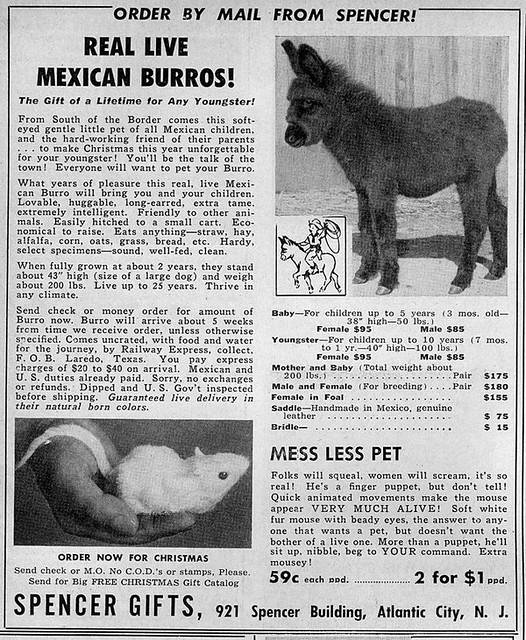 by stevesobczuk real live mexican burros by mail by stevesobczuk