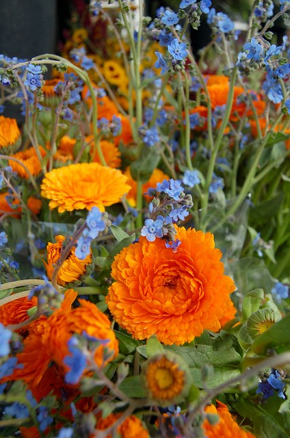 Orange And Blue Flowers Flickr Photo Sharing