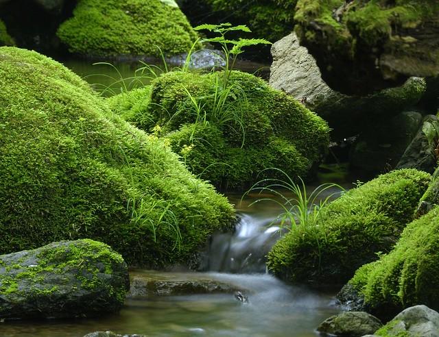 moss chichibu tama national park 261 4 jun 07 blueskyinby flickr. Black Bedroom Furniture Sets. Home Design Ideas