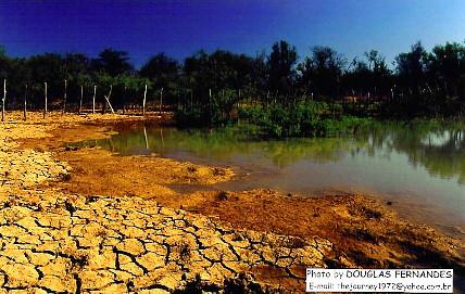 Brazilian Semiarid Caatinga Nordestina Semi 225 Rido Brasi Flickr