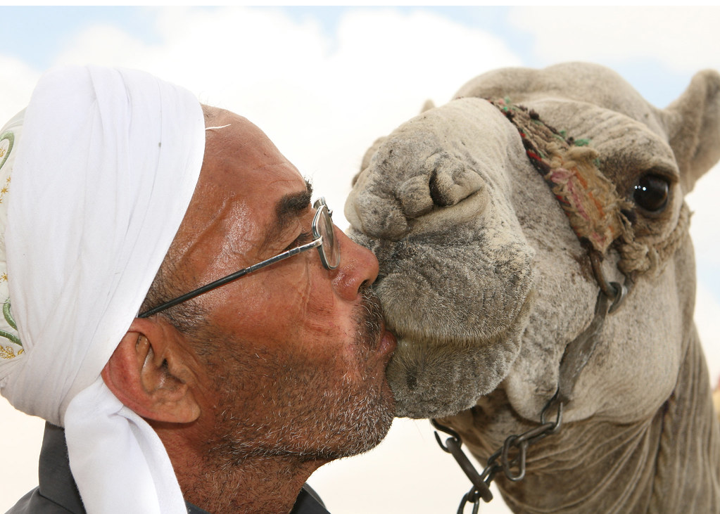 Man Kissing Camel near Sphinx in Cairo | David Dennis | Flickr