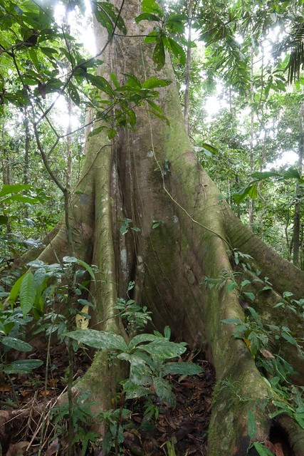 South American Rainforest Facts For Kids