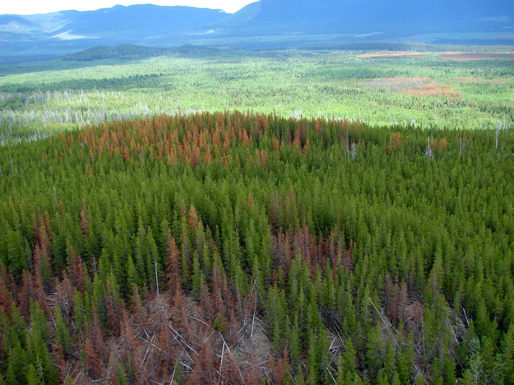 What Are The Natural Resources Of British Columbia Canada