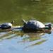 turtle yoga