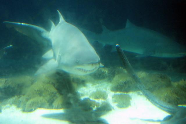 Coney Island Shark Aquarium Truck