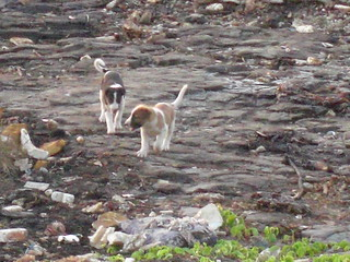 Puppies At Worli Having Fun | by Swami Stream