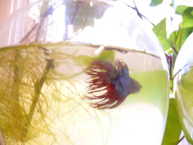 Cure Fin Rot Naturally