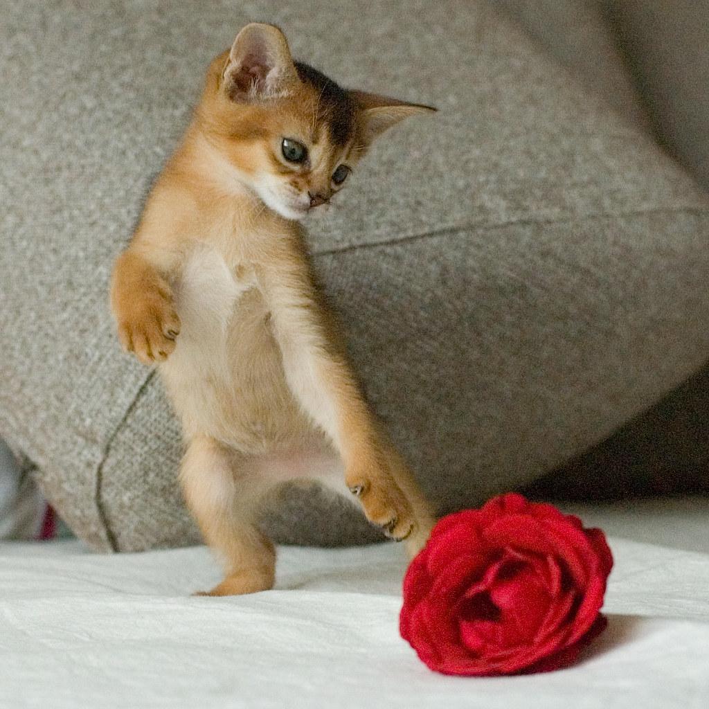 how to get flower cat true form