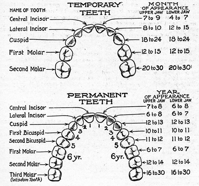 Mouth Diagram Health Manual For Teachers Virginia Health Flickr