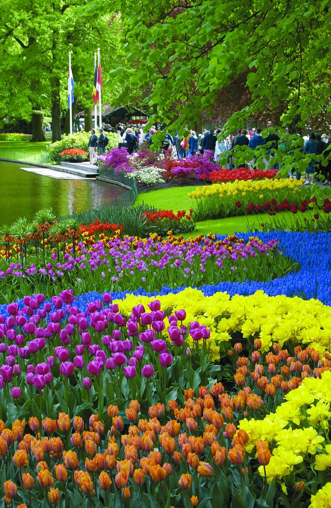 Keukenhof Tulip Gardens Tour Amsterdam These Beautiful