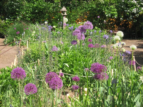 Allium display | by Brooklyn Botanic Garden