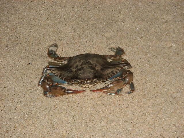 Blue Claw Crab Long Island Sound Regulations