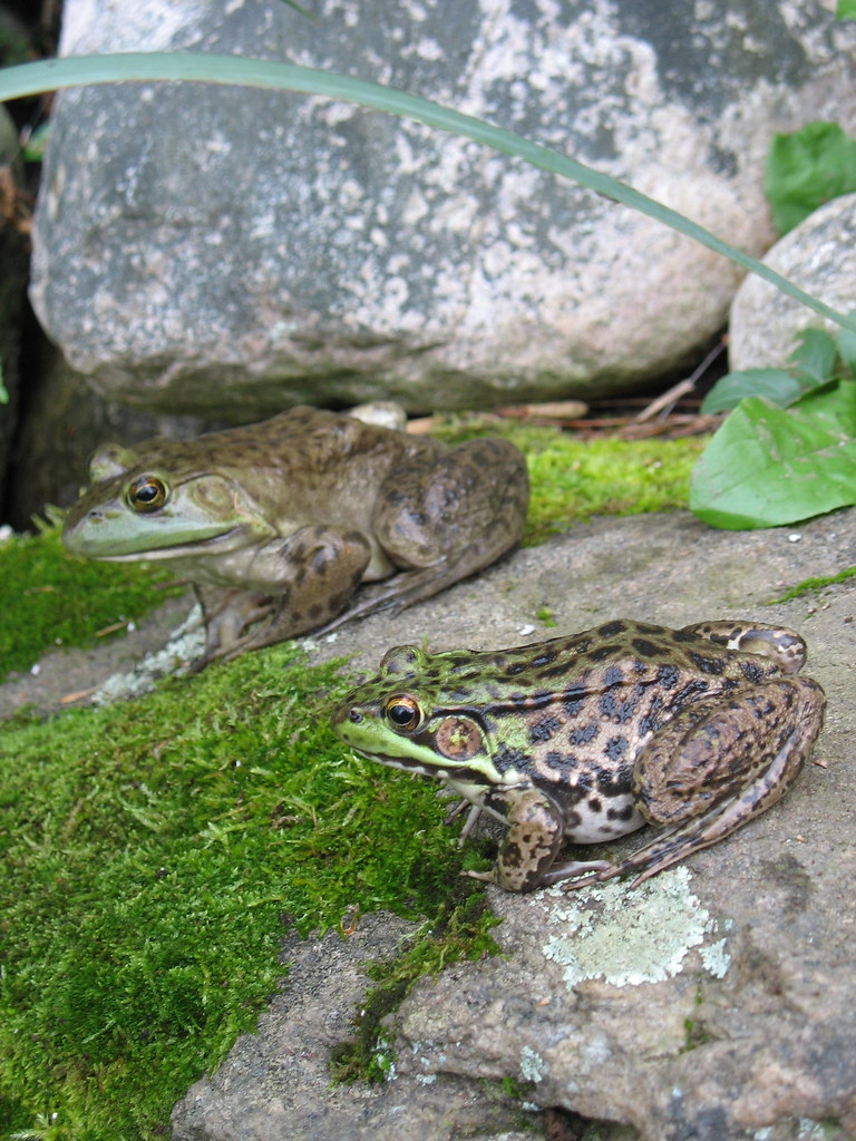 Two Frogs New Home Story