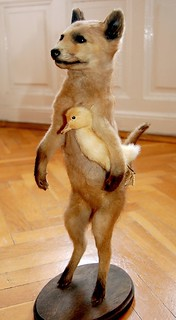 Vintage Fox and Duck Taxidermy | by Curious Expeditions