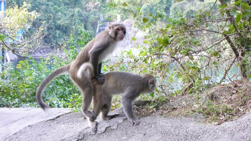 Fuck a monkey-8290