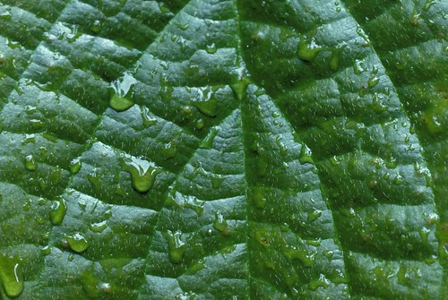 Detail of water droplets on leaf | by World Bank Photo Collection