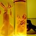 3 Cephalopods in jars
