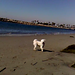 Belle & Scruffy at the San Gabriel River Low Tide Beach
