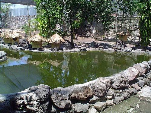 Estanque para patos flickr photo sharing for Aireadores para estanques piscicolas