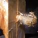 Lead bullet meets wood