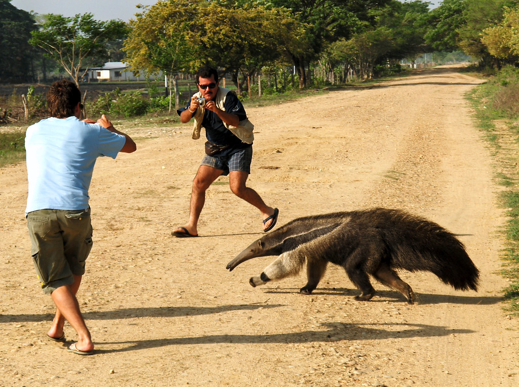Photographing a Giant Anteater - Photo by Reiner Ehrenfrie ...