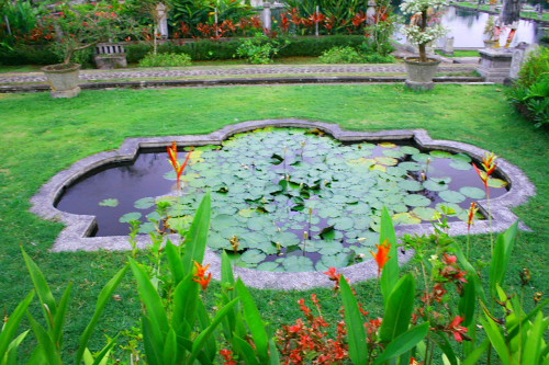 Lotus Pond A Lotus Pond In The Water Garden Called Quot Tirta Flickr