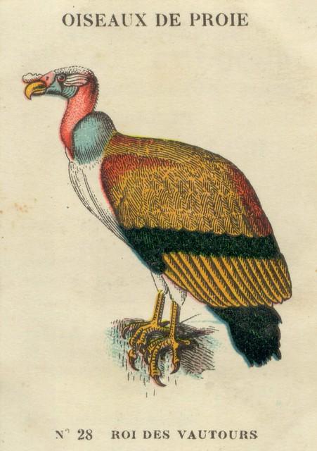 Inventaire des oiseaux de proie, oies et passereaux en