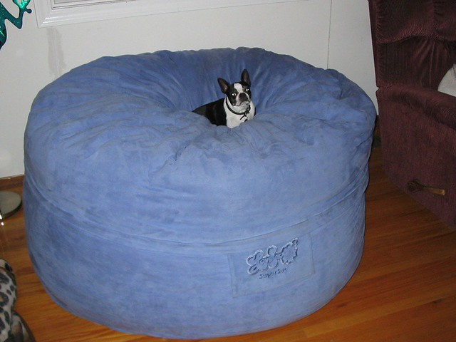 biggest dog bed ever erica obrien flickr biggest king size bed submited images