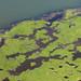 Oil mottles the marsh edge.