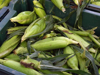 070707sweetcorn | by swampkitty