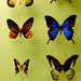 Assorted Butterflies from the Etymology Department ll