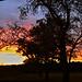 full pano sunset