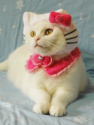 Hello Kitty cat costume | by devlyn