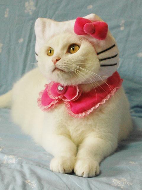 Kitty Cat Costume Toddler Girl