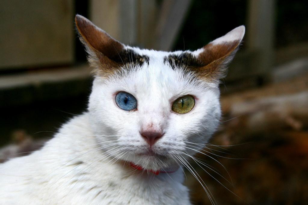Lunenburg Mass Cat Rescue