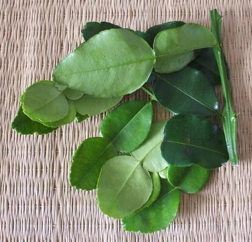Lime Leaves Thai Restaurant Queanbeyan Queanbeyan Nsw