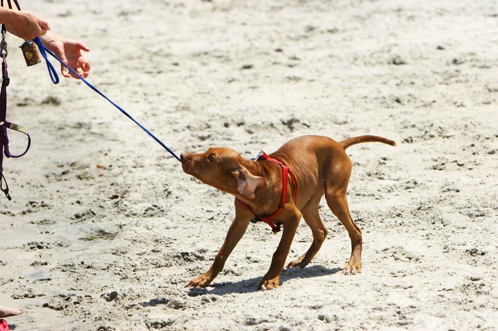 Dog Training Leash Petsmart