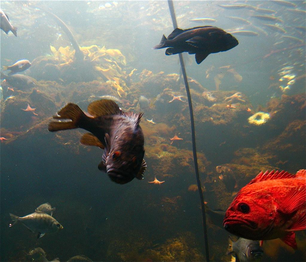 Fish Viewing People Steinhart Aquarium San Francisco