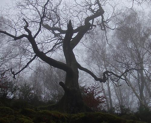Creepy tree in fog creepy tree in fog jessica z flickr for Creepy trees for halloween