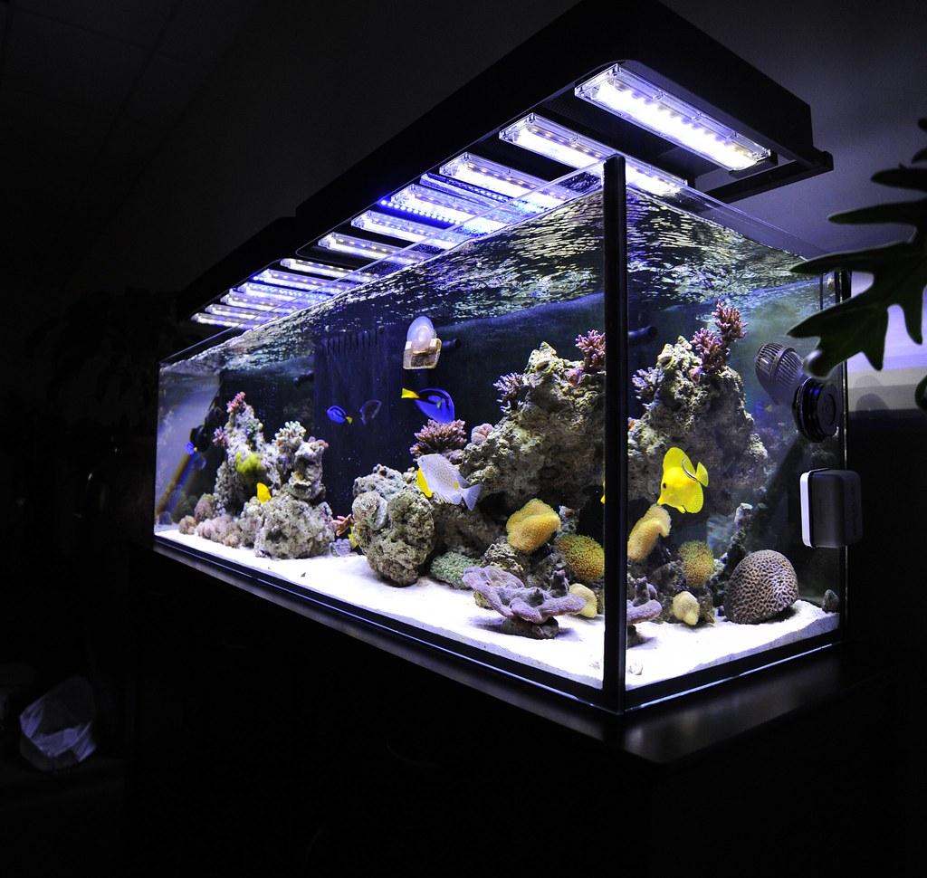 Panorama Led Aquarium Light Fixture Over Reef Aquarium