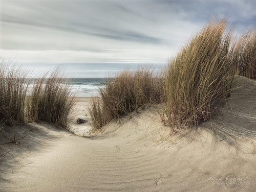 Fresh path – South Jetty , Florence Oregon | by janusz l