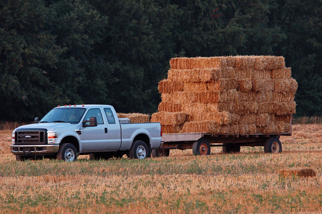 Oat Straw Bales | They've harvested the field of oats ...