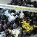 Blackberry Cobbler #2 063