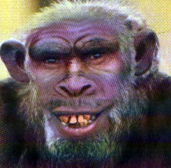 Humanzee Experiment Are real humanzee's possible? oliver (pictured ... Yerkes Humanzee