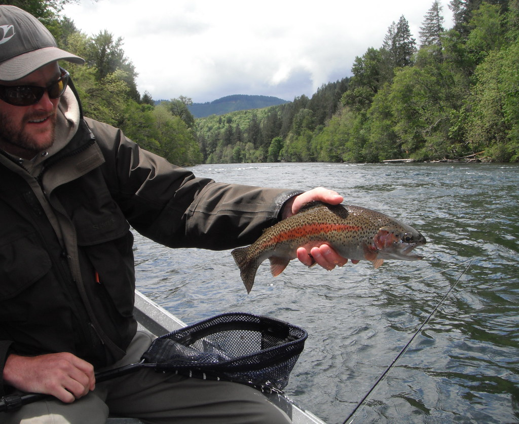 Wild rainbow on the mckenzie the mckenzie blue river for Odfw fish stocking