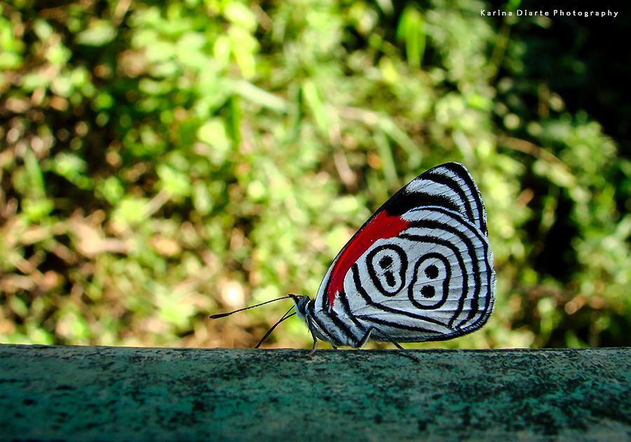 mariposa 88 the 88 butterfly wwwfamiliadiartecom